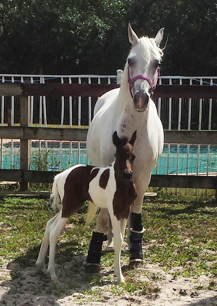 baby_horse_florida